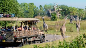 disney's animal kingdom theme park | walt disney world resort