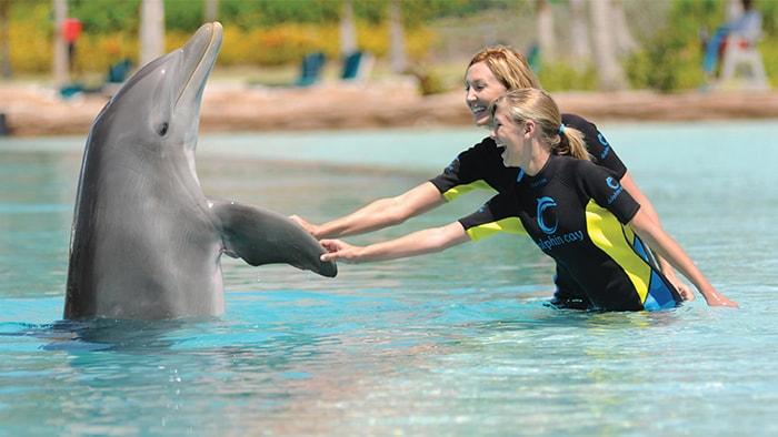 2 mujeres sonrientes en trajes de buceo interactúan con un delfín