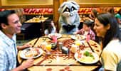 Meeko the raccoon visits a family of 4 during their morning meal.