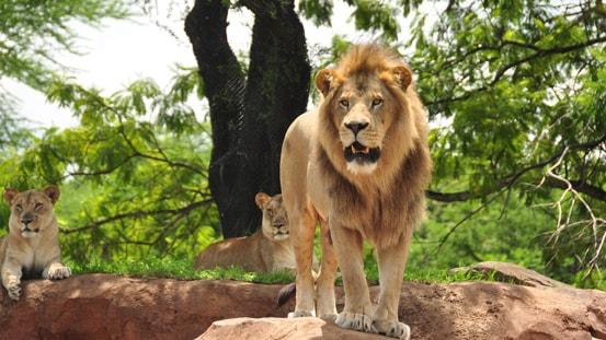 Disney S Animal Kingdom Lodge Disney Vacation Club