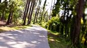 Vista de um caminho de cascalho margeado por árvores através do bosque