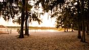Vue sur un lac avec plage de sable entourée de grands arbres