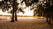 Vista de un lago con playa rodeado por árboles altos