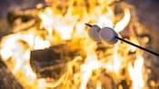 Dois marshmallows em um palito assando em uma fogueira de acampamento