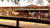 5 horses at Tri-Circle-D Ranch