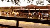 5 cavalos no Tri-Circle-D Ranch
