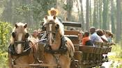 Des dizaines de visiteurs souriant à bord de chariots inspirés de l'Ouest d'autrefois tirés par 2chevaux