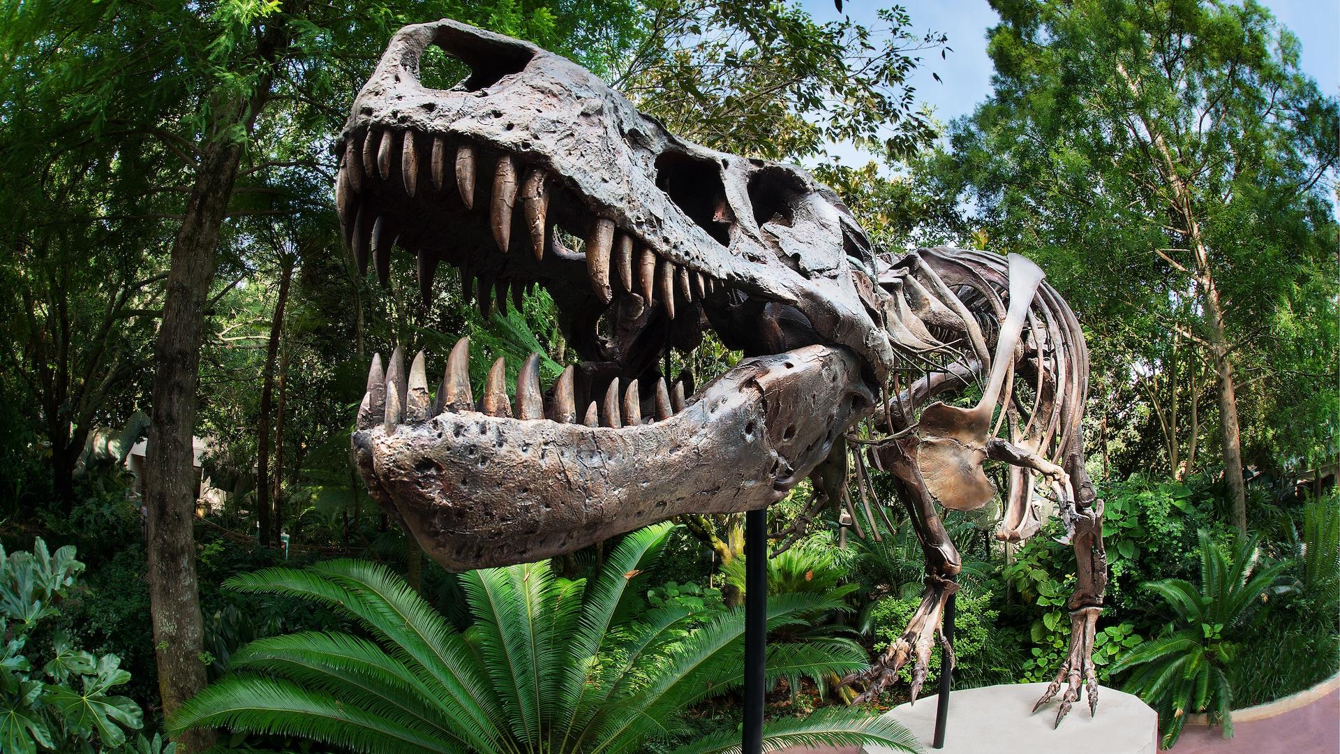 Dino-Sue | Animal Kingdom Attractions