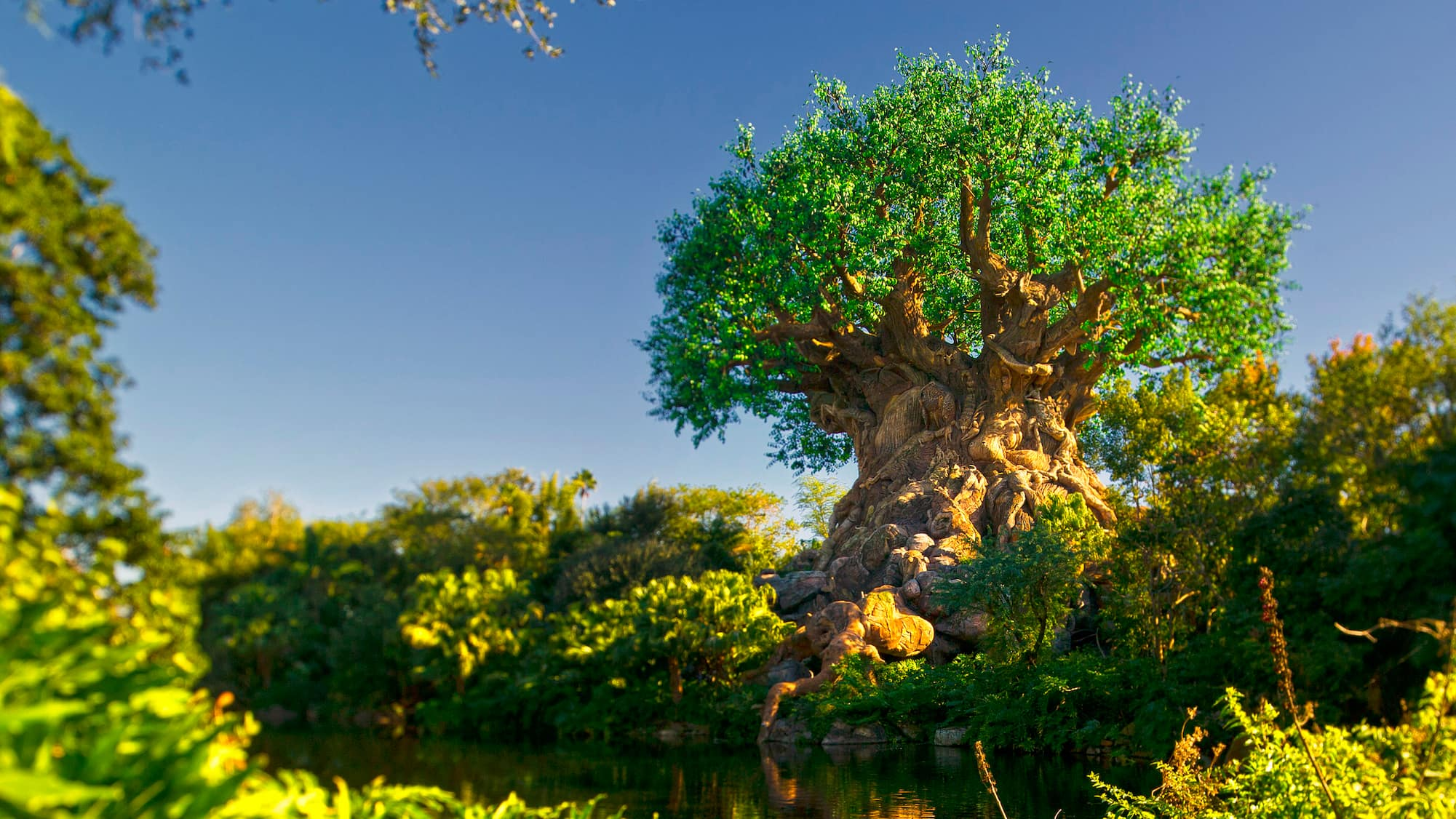 Tree of Life Animal Kingdom Attractions