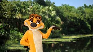 Timon de The Lion King en el Parque Temático Disney's Animal Kingdom