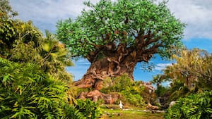 The Tree of Life, the iconic centerpiece of Disney's Animal Kingdom park, towers into the daytime sky