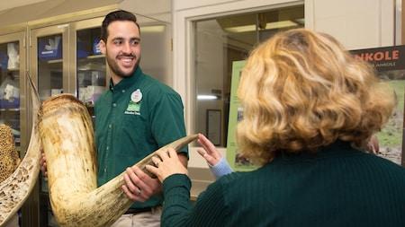 Un miembro del equipo educativo del Parque Temático Disney's Animal Kingdom sostiene colmillos de elefante para que los Visitantes puedan tocarlos