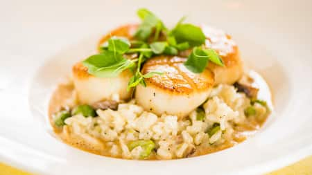 A bowl of risotto topped with 4 scallops and baby greens