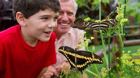 A boy and his grandfather marvel at zebra longwing butterflies on a flowering plant