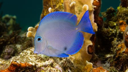 A colorful tropical fish swims by the rocky ocean floor