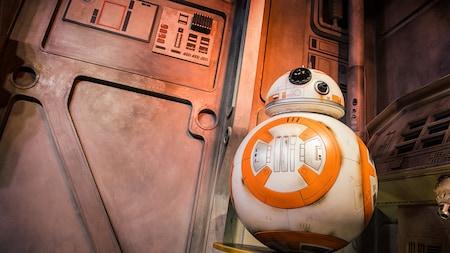 BB-8 espera a los Visitantes durante una experiencia de Encuentro con Personajes en Disney's Hollywood Studios