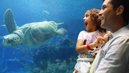 Uma menina e o seu pai olham com expressão de encanto assistindo uma tartaruga marinha nadar em um tanque no Epcot