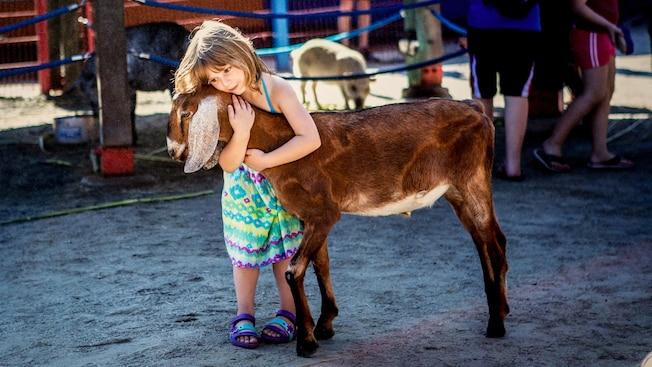 Une fille enlace une chèvre dans ses bras au parc animalier Affection Section