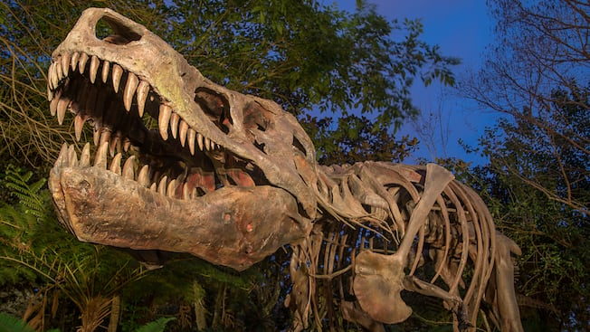 Skeleton of a T-Rex spot-lit at night in DinoLand U.S.A.