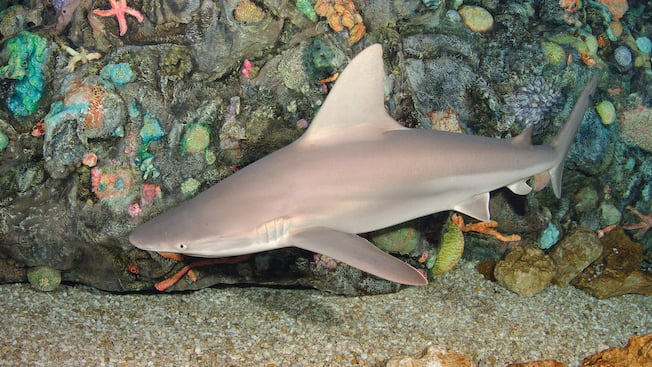 Sharks Rays Epcot Attractions Walt Disney World Resort