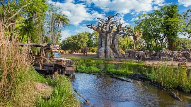 Un autobus safari sans fenêtres roule dans une rivière et passe devant 3éléphants