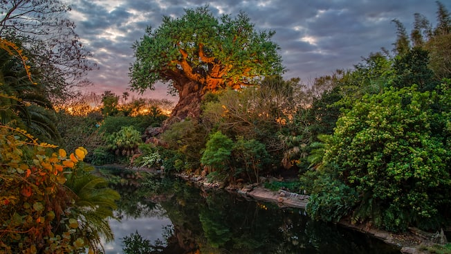 The Tree of Life on the banks of Discovery River on a cloudy day at dawn