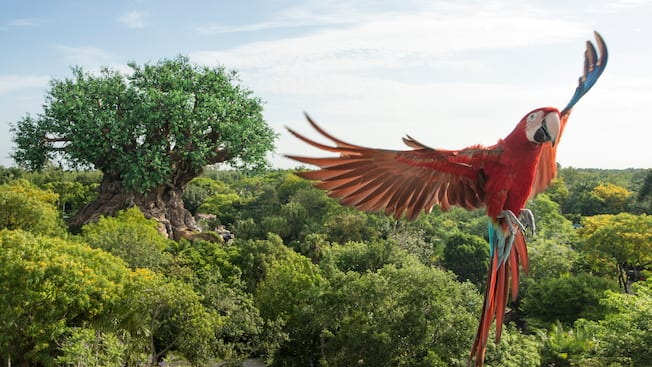 A macaw slows to land and, in the background, the Tree of Life