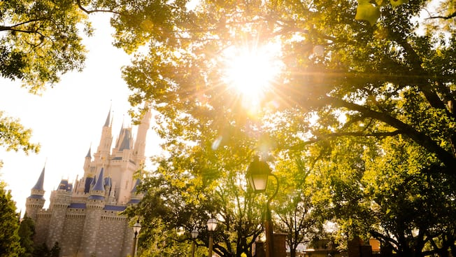 Sun peeking through the trees with Cinderella Castle in the background
