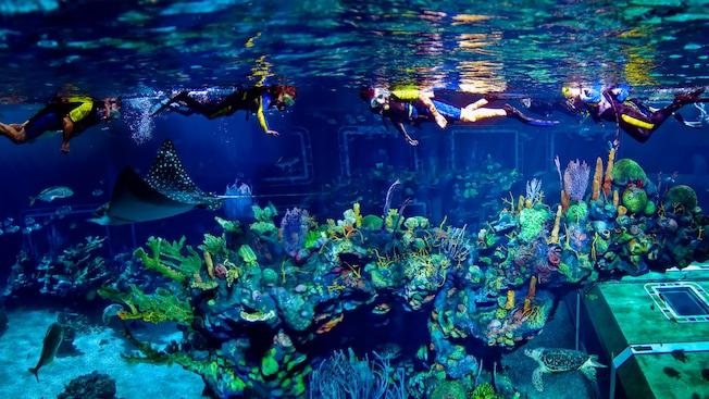 Rayas, tortugas marinas y otras criaturas nadando debajo de una serie de buceadores con tanque en la superficie