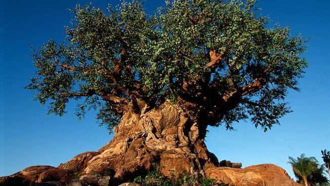 Un árbol antiguo e intrincado entre la oscuridad y los rayos del sol