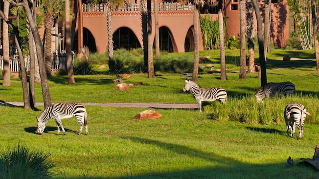 Balcony view of savanna with grazing zebras, trees, resort