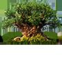 Ícone da Tree of Life
